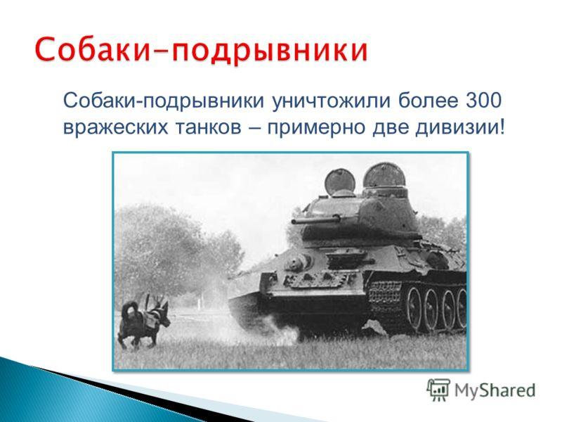 Собаки-подрывники уничтожили более 300 вражеских танков – примерно две дивизии!