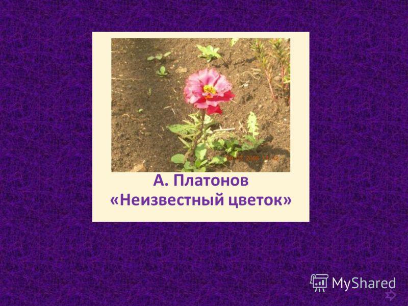 А. Платонов «Неизвестный цветок»