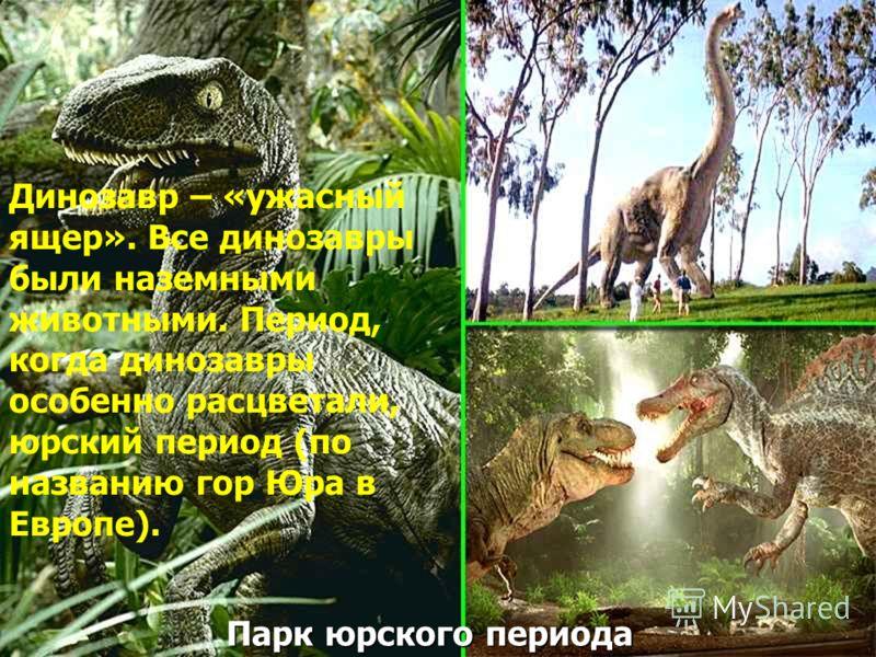 Парк юрского периода Динозавр – «ужасный ящер». Все динозавры были наземными животными. Период, когда динозавры особенно расцветали, юрский период (по названию гор Юра в Европе).