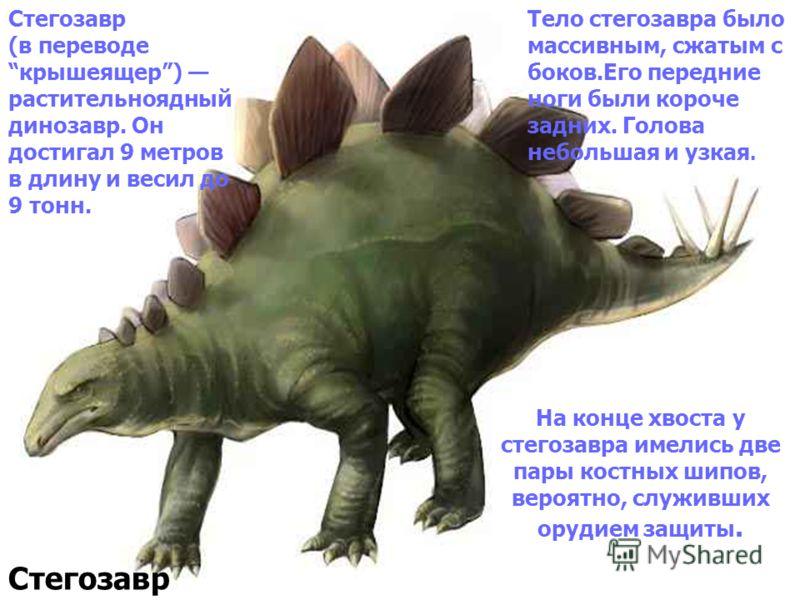 На конце хвоста у стегозавра имелись две пары костных шипов, вероятно, служивших орудием защиты. Стегозавр Стегозавр (в переводе крышеящер) растительноядный динозавр. Он достигал 9 метров в длину и весил до 9 тонн. Тело стегозавра было массивным, сжа
