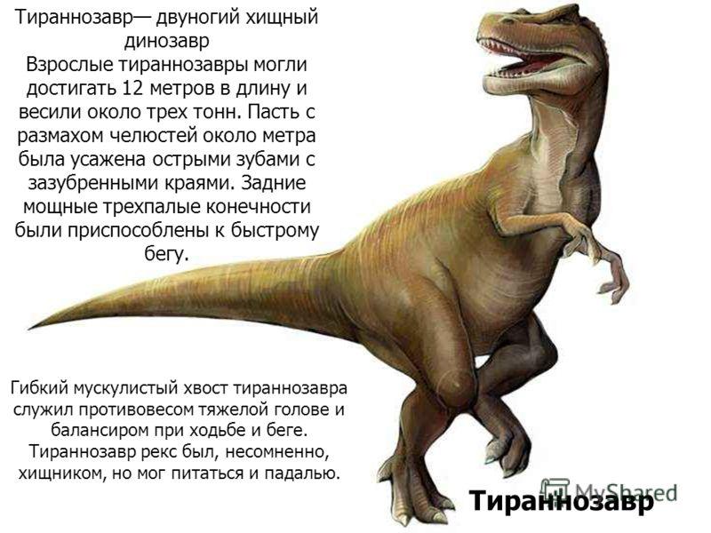 Тираннозавр двуногий хищный динозавр Взрослые тираннозавры могли достигать 12 метров в длину и весили около трех тонн. Пасть с размахом челюстей около метра была усажена острыми зубами с зазубренными краями. Задние мощные трехпалые конечности были пр