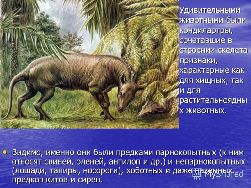 Видимо, именно они были предками парнокопытных (к ним относят свиней, оленей, антилоп и др.) и непарнокопытных (лошади, тапиры, носороги), хоботных и даже наземных предков китов и сирен. Видимо, именно они были предками парнокопытных (к ним относят с