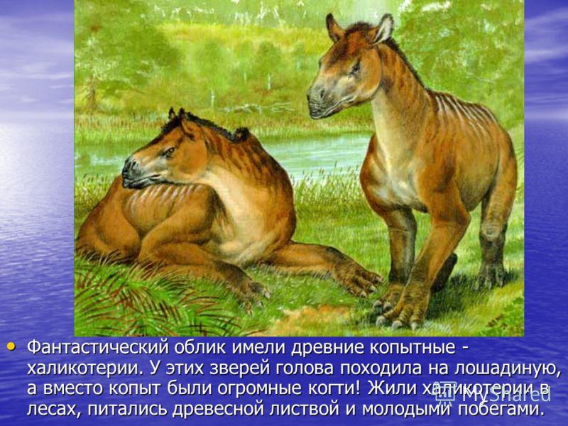 Фантастический облик имели древние копытные - халикотерии. У этих зверей голова походила на лошадиную, а вместо копыт были огромные когти! Жили халикотерии в лесах, питались древесной листвой и молодыми побегами. Фантастический облик имели древние ко