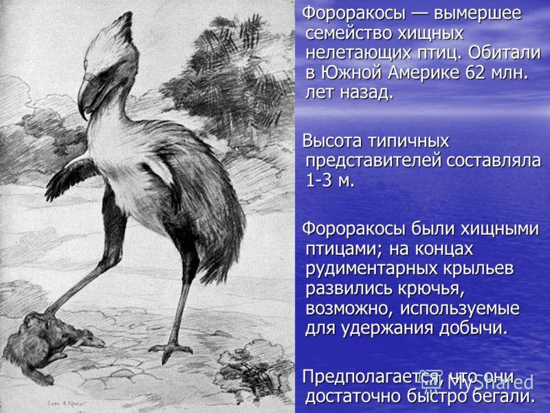 Фороракосы вымершее семейство хищных нелетающих птиц. Обитали в Южной Америке 62 млн. лет назад. Фороракосы вымершее семейство хищных нелетающих птиц. Обитали в Южной Америке 62 млн. лет назад. Высота типичных представителей составляла 1-3 м. Высота