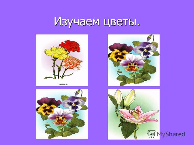 Изучаем цветы.