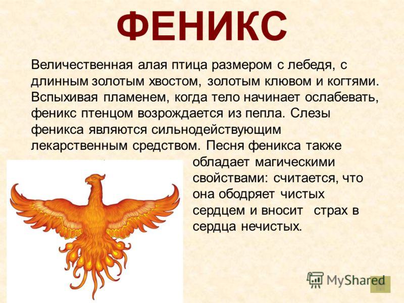 ФЕНИКС Величественная алая птица размером с лебедя, с длинным золотым хвостом, золотым клювом и когтями. Вспыхивая пламенем, когда тело начинает ослабевать, феникс птенцом возрождается из пепла. Слезы феникса являются сильнодействующим лекарственным