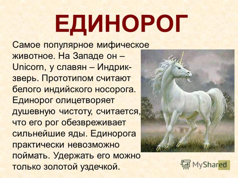 ЕДИНОРОГ Самое популярное мифическое животное. На Западе он – Unicorn, у славян – Индрик- зверь. Прототипом считают белого индийского носорога. Единорог олицетворяет душевную чистоту, считается, что его рог обезвреживает сильнейшие яды. Единорога пра