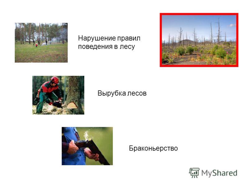 Нарушение правил поведения в лесу Вырубка лесов Браконьерство