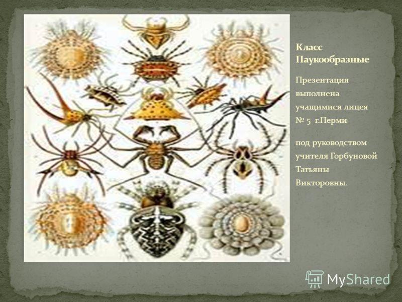 Презентация выполнена учащимися лицея 5 г.Перми под руководством учителя Горбуновой Татьяны Викторовны.