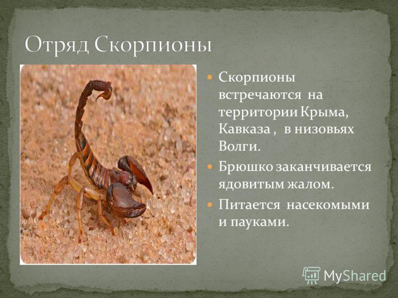 Скорпионы встречаются на территории Крыма, Кавказа, в низовьях Волги. Брюшко заканчивается ядовитым жалом. Питается насекомыми и пауками.