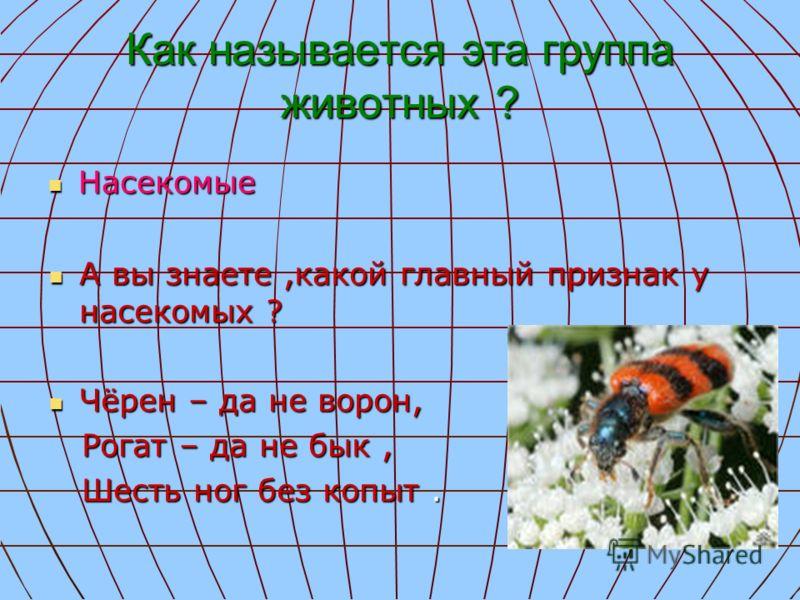 Как называется эта группа животных ? Насекомые Насекомые А вы знаете,какой главный признак у насекомых ? А вы знаете,какой главный признак у насекомых ? Чёрен – да не ворон, Чёрен – да не ворон, Рогат – да не бык, Рогат – да не бык, Шесть ног без коп