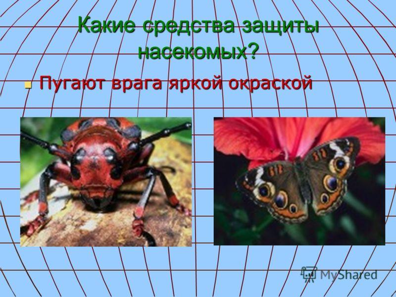 Какие средства защиты насекомых? Пугают врага яркой окраской