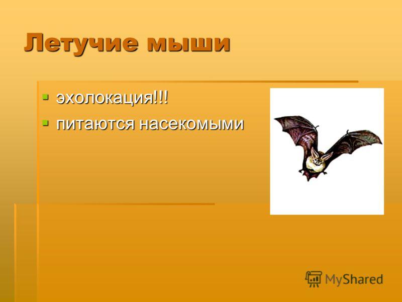 Летучие мыши эхолокация!!! эхолокация!!! питаются насекомыми питаются насекомыми
