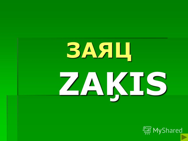 ЗАЯЦ ZAĶIS