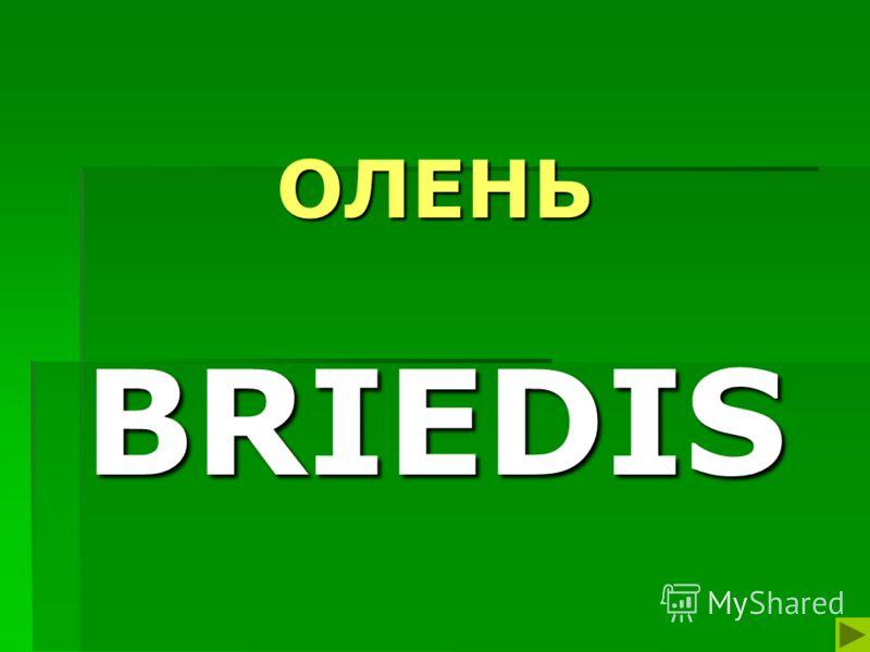 ОЛЕНЬ BRIEDIS