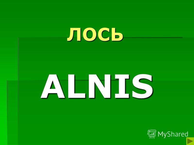 ЛОСЬ ALNIS