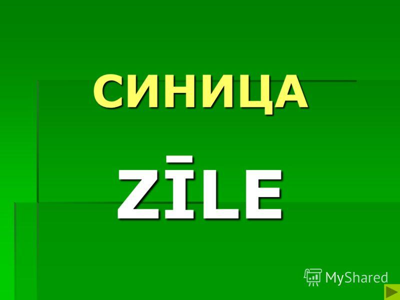 СИНИЦА ZĪLE