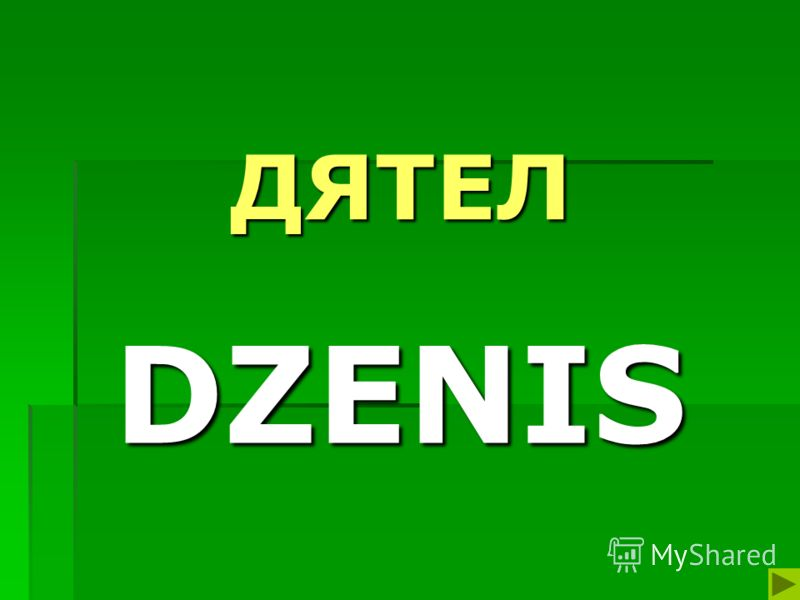 ДЯТЕЛ DZENIS