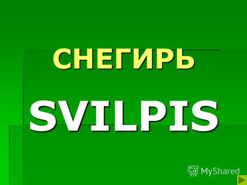 СНЕГИРЬ SVILPIS