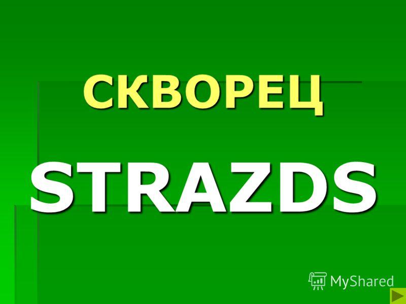 СКВОРЕЦ STRAZDS