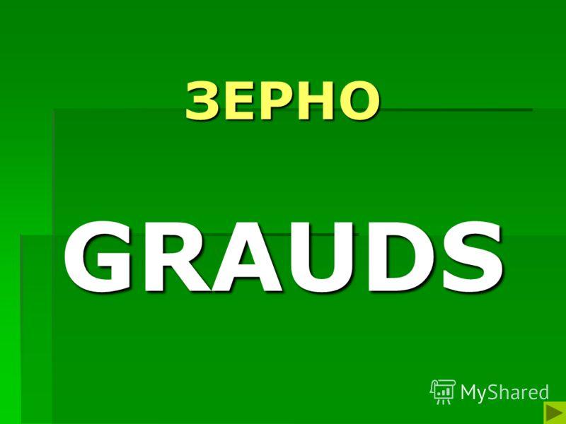 ЗЕРНО GRAUDS