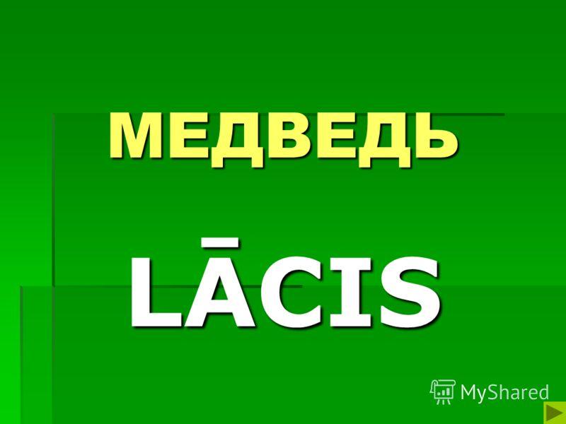 МЕДВЕДЬ LĀCIS