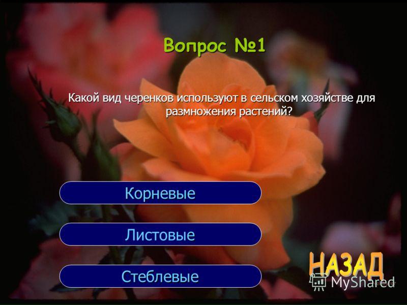 Вопрос 1 Какой вид черенков используют в сельском хозяйстве для размножения растений? Стеблевые е Листовые Корневые