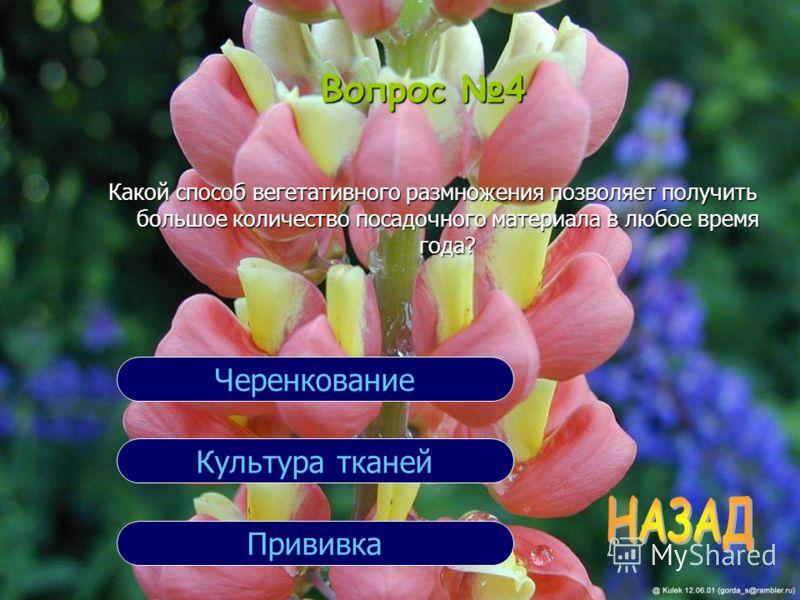 Вопрос 4 Какой способ вегетативного размножения позволяет получить большое количество посадочного материала в любое время года? Прививка Культура тканей Черенкование
