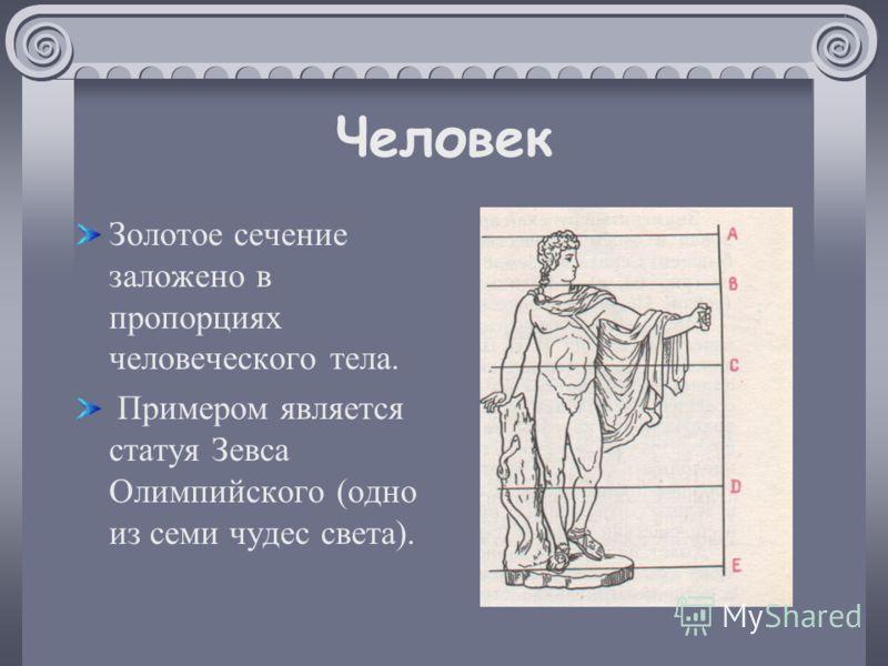 Человек Золотое сечение заложено в пропорциях человеческого тела. Примером является статуя Зевса Олимпийского (одно из семи чудес света).