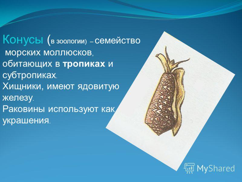Конусы ( в зоологии ) – семейство морских моллюсков, обитающих в тропиках и субтропиках. Хищники, имеют ядовитую железу. Раковины используют как украшения.