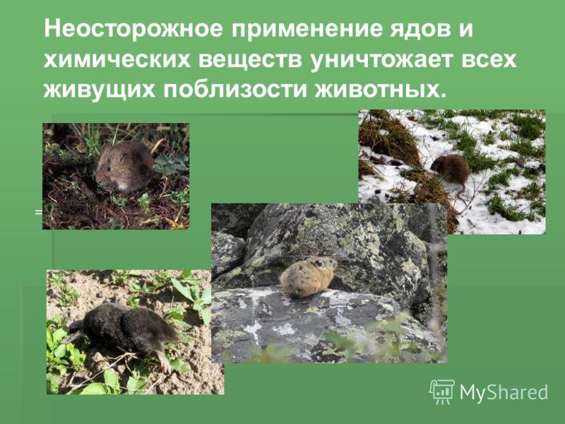 = Неосторожное применение ядов и химических веществ уничтожает всех живущих поблизости животных.