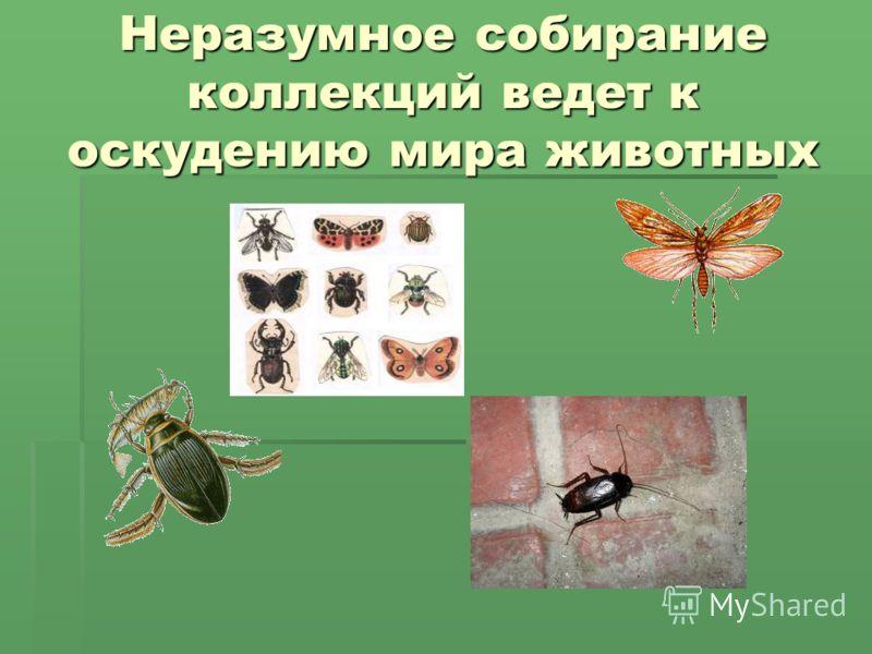 Неразумное собирание коллекций ведет к оскудению мира животных