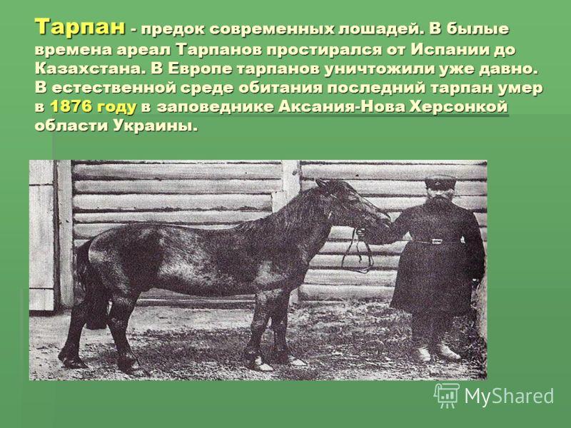 Тарпан - предок современных лошадей. В былые времена ареал Тарпанов простирался от Испании до Казахстана. В Европе тарпанов уничтожили уже давно. В естественной среде обитания последний тарпан умер в 1876 году в заповеднике Аксания-Нова Херсонкой обл