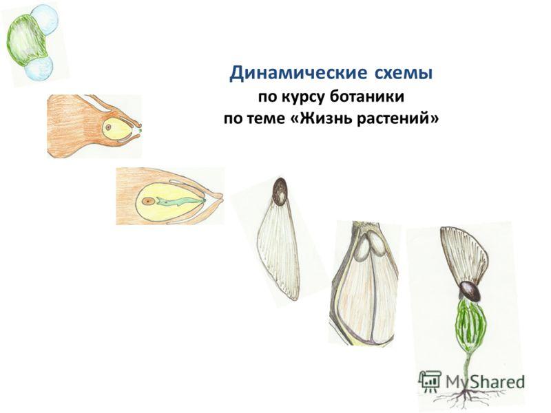 Динамические схемы по курсу ботаники по теме «Жизнь растений»