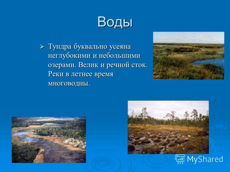 Воды Тундра буквально усеяна неглубокими и небольшими озерами. Велик и речной сток. Реки в летнее время многоводны. Тундра буквально усеяна неглубокими и небольшими озерами. Велик и речной сток. Реки в летнее время многоводны.