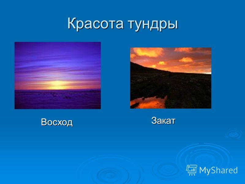 Красота тундры Закат Восход
