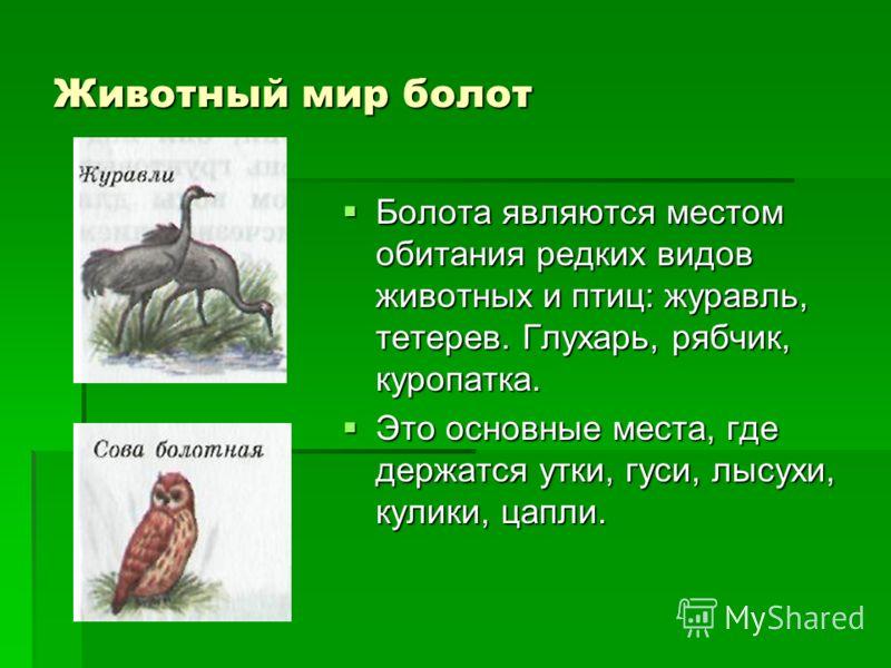 Животный мир болот Болота являются местом обитания редких видов животных и птиц: журавль, тетерев. Глухарь, рябчик, куропатка. Болота являются местом обитания редких видов животных и птиц: журавль, тетерев. Глухарь, рябчик, куропатка. Это основные ме
