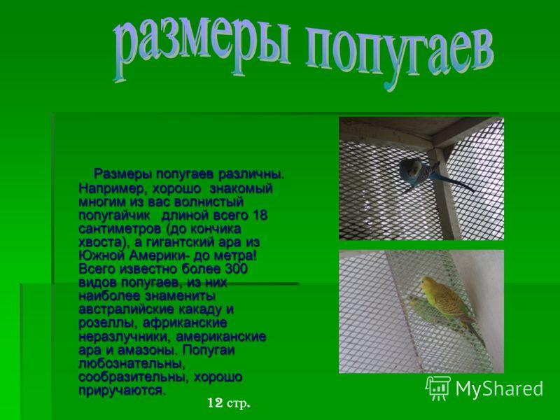 Размеры попугаев различны. Например, хорошо знакомый многим из вас волнистый попугайчик длиной всего 18 сантиметров (до кончика хвоста), а гигантский ара из Южной Америки- до метра! Всего известно более 300 видов попугаев, из них наиболее знамениты а