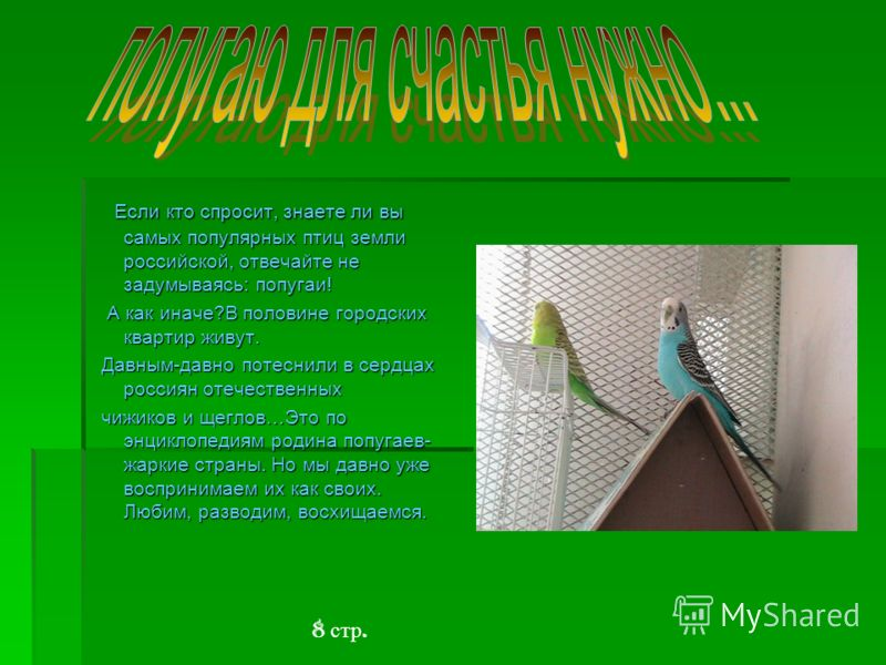 Если кто спросит, знаете ли вы самых популярных птиц земли российской, отвечайте не задумываясь: попугаи! Если кто спросит, знаете ли вы самых популярных птиц земли российской, отвечайте не задумываясь: попугаи! А как иначе?В половине городских кварт
