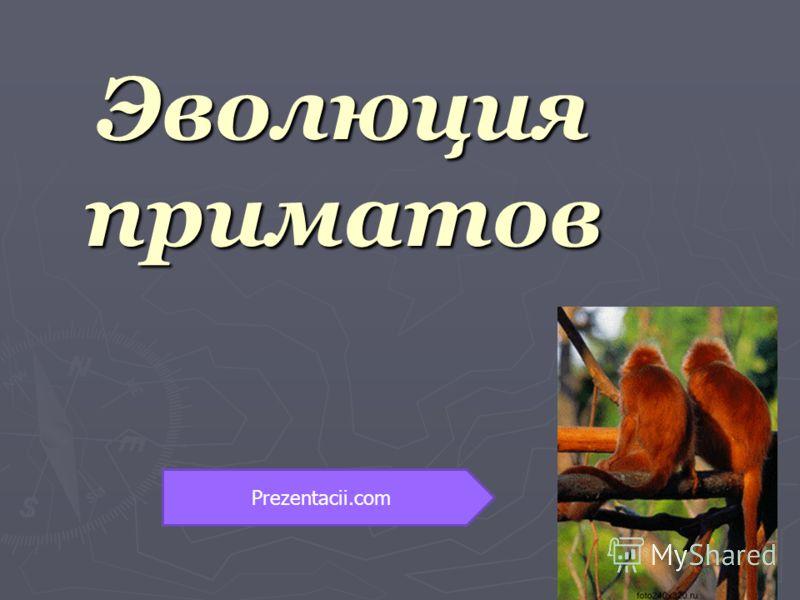Эволюция приматов Prezentacii.com