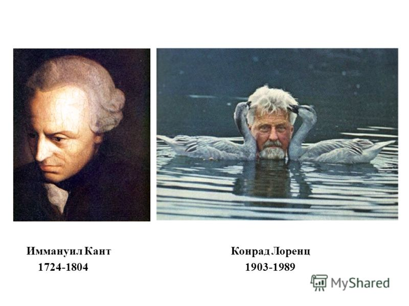 Иммануил КантКонрад Лоренц 1724-1804 1903-1989