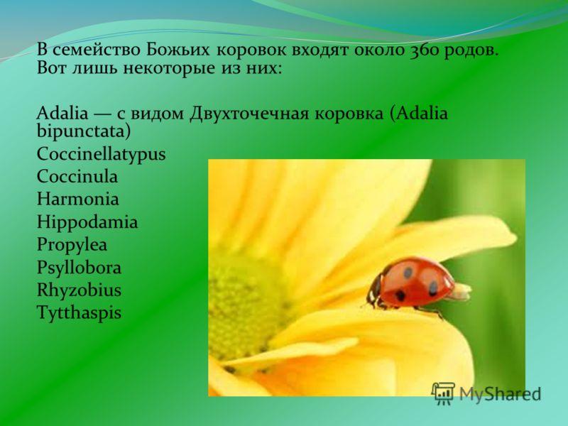 В семейство Божьих коровок входят около 360 родов. Вот лишь некоторые из них: Adalia с видом Двухточечная коровка (Adalia bipunctata) Coccinellatypus Coccinula Harmonia Hippodamia Propylea Psyllobora Rhyzobius Tytthaspis