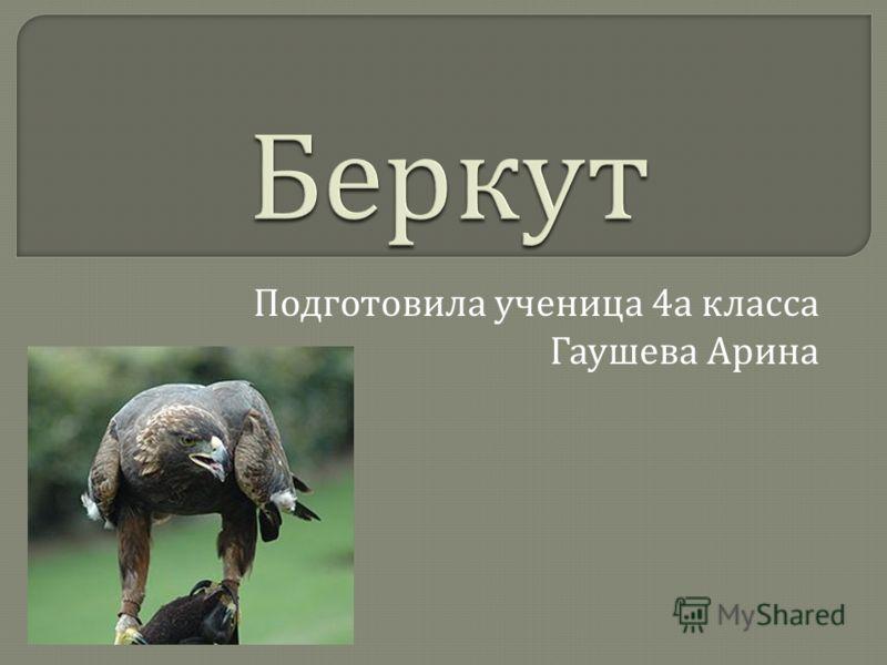 Беркут Подготовила ученица 4 а класса Гаушева Арина