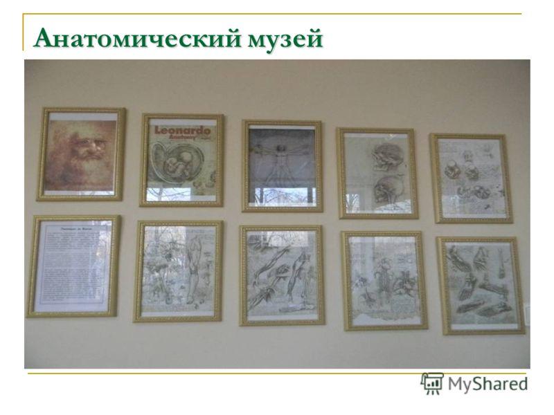 Анатомический музей