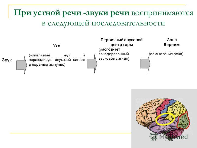 При устной речи -звуки речи воспринимаются в следующей последовательности Звук Ухо (улавливает звук и перекодирует звуковой сигнал в нервный импульс) Первичный слуховой центр коры (распознает закодированный звуковой сигнал) Зона Вернике (осмысление р