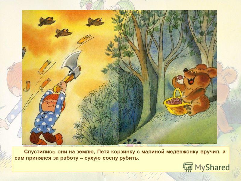Спустились они на землю, Петя корзинку с малиной медвежонку вручил, а сам принялся за работу – сухую сосну рубить.