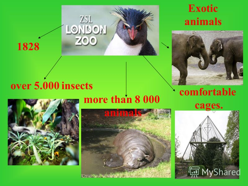 1828 over 5.000 insects more than 8 000 animals Exotic animals comfortable cages.