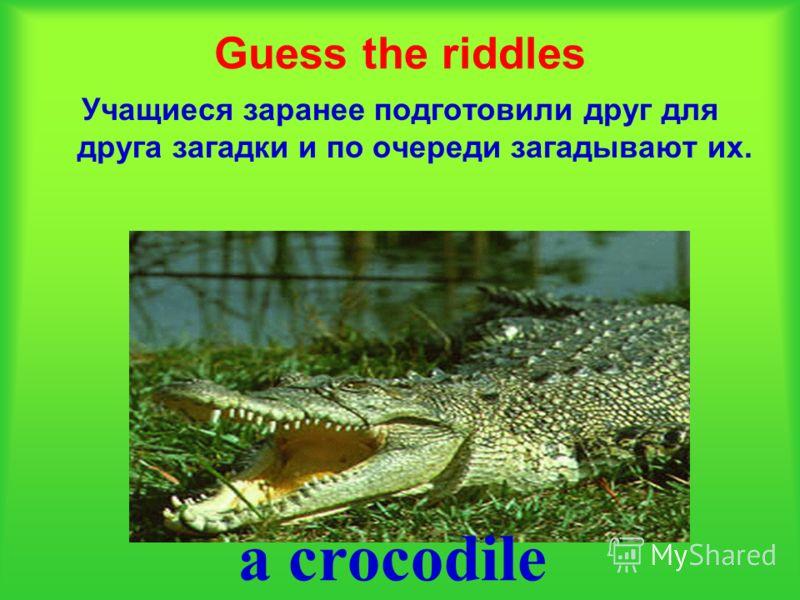 Guess the riddles Учащиеся заранее подготовили друг для друга загадки и по очереди загадывают их. a crocodile