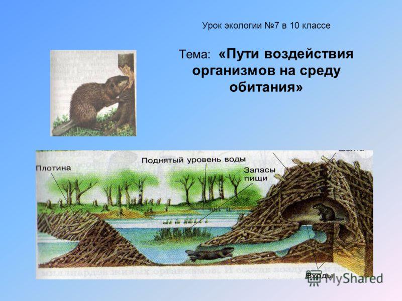 Урок экологии 7 в 10 классе Тема: «Пути воздействия организмов на среду обитания»