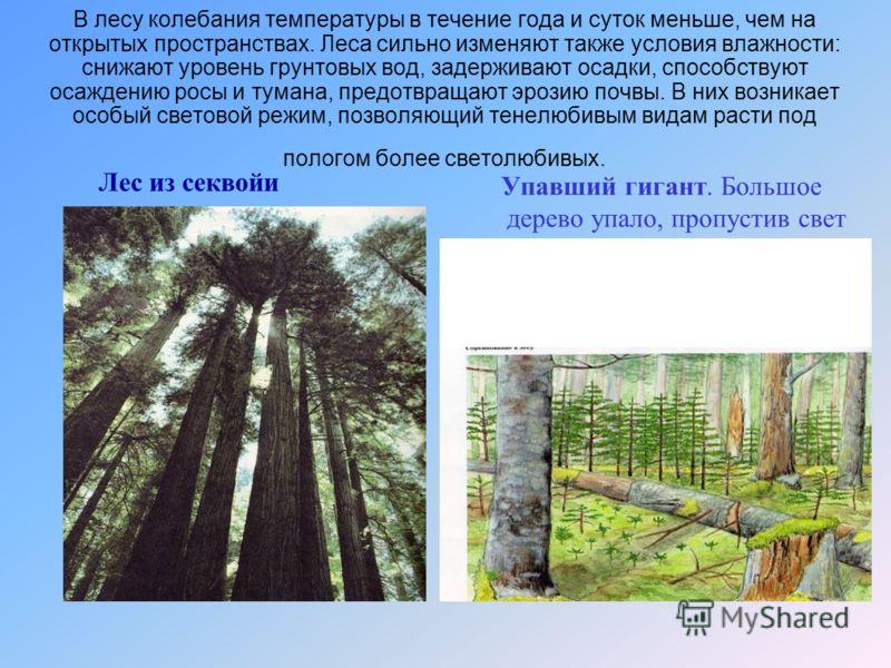 В лесу колебания температуры в течение года и суток меньше, чем на открытых пространствах. Леса сильно изменяют также условия влажности: снижают уровень грунтовых вод, задерживают осадки, способствуют осаждению росы и тумана, предотвращают эрозию поч